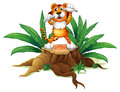A stump with a tiger illustration of on white background Royalty Free Stock Photography