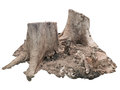 The stump what thing that good represent to world destroyed Stock Photography