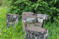 Stumps among green grass Royalty Free Stock Photo