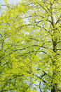 Stunning green leaves as a background. Royalty Free Stock Photos