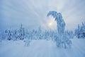 Stunning Lapland wilderness in winter