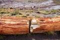 Stunning petrified wood in the Petrified Forest National Park, Arizona Royalty Free Stock Photo