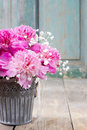 Stunning pink peonies in silver bucket house decoration Royalty Free Stock Photography