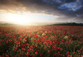 Stunning poppy field landscape under Summer sunset sky Royalty Free Stock Photo