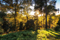 Stunning vibrant Autumn landscape of sunburst through trees in f Royalty Free Stock Photo