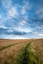 Stunning wheat field landscape under summer stormy sunset sky Stock Photography