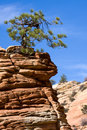 Stunted tree on a rocky outcrop in zion Stock Photography