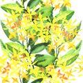 Stylish flowers illustration Royalty Free Stock Photo