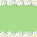 Stylish nature background with white chamomiles Royalty Free Stock Photo