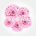 Stylish vector poster with beautiful flowers - pink dahlia and place for text. Vintage greeting card. Vector Royalty Free Stock Photo