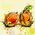 Stylized apricot illustration Stock Photography