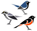 Stylized birds black throated gray warbler black throated blue warbler and american redstart Royalty Free Stock Photo