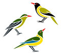 Stylized birds orioles western oriole green oriole and green headed oriole Stock Images