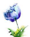 Stylized blue tulip flowers watercolor illustration Royalty Free Stock Image