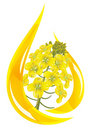 Stylized drop of oil and rapeseed flower. Stock Photography