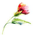 Stylized flower watercolor illustration red Stock Photography