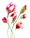 Stylized flowers red watercolor illustration Stock Images