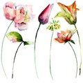 Stylized Flowers Watercolor Il...