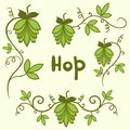 Stylized hops set green vector isolated illustration Royalty Free Stock Images