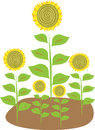 Stylized illustration of five sunflowers Royalty Free Stock Photo