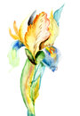 Stylized iris flower watercolor illustration Stock Photos