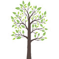 Stylized lone tree with fresh young leaves in spring this image is an illustration Stock Photo