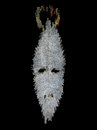 Stylized mask in the background spirit africa Royalty Free Stock Photography
