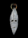 Stylized mask in the background spirit africa Royalty Free Stock Images