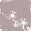 Stylized Orchid Royalty Free Stock Photo