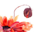 Stylized Poppy flowers illustration Royalty Free Stock Photos