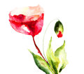 Stylized poppy flowers illustration watercolor painting Royalty Free Stock Photo