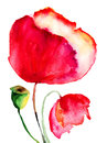 Stylized poppy flowers watercolor illustration Royalty Free Stock Image