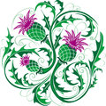 Stylized vector image of a thistle