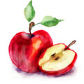 Stylized watercolor red apple illustration Royalty Free Stock Images