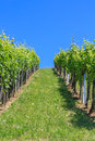 Styrian Tuscany Vineyard, Styria, Austria Royalty Free Stock Photos