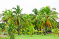 Suanluangrama coconut trees in the park Royalty Free Stock Photos