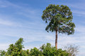 Sublime Tree Royalty Free Stock Photo