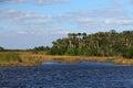 Subtropical Everglades Landcape