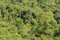 Subtropical Rain Forest