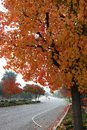 Suburban Street with Fall Leaves on Trees Arching Over Frame Royalty Free Stock Photo