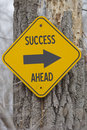 Success ahead arrow sign yellow and black on a old tree making a great concept Stock Photos