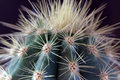 Succulent cactus macro with vivid texture and col Royalty Free Stock Photos