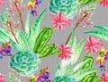 Succulent design, seamless pattern. Royalty Free Stock Photo