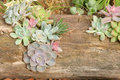 Succulent plants and dead wood the many are planted in Stock Photos