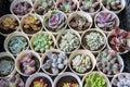 Succulent plants nature yunnan kunming Stock Photos