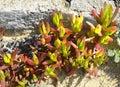 Succulent Plants On The Ocean ...