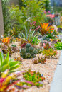 Succulent water wise desert garden with aloes cactus agaves and native plants Stock Photography
