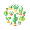 Succulents and cacti flat style multicolored circle vector.