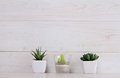 Succulents and cactus  in pots on over white wooden background. Home interior decoration. Scandinavian or  shabby chic style. Copy Royalty Free Stock Photo