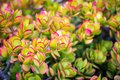 Succulents and flowers in the gardens just outside of the Alcatraz prison Royalty Free Stock Photo